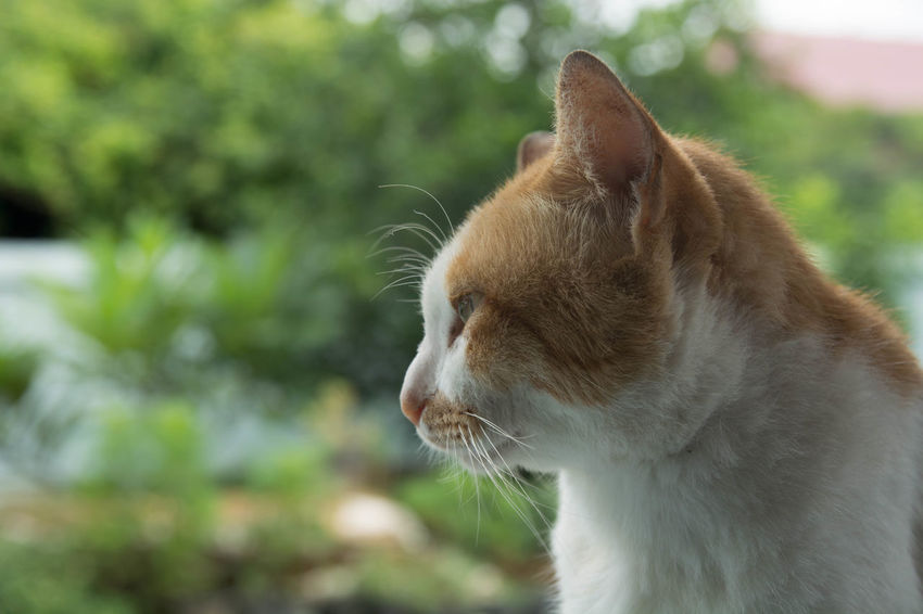 Lovely cat Animal Animal Body Part Animal Head  Animal Themes Cat Close-up Day Domestic Domestic Animals Domestic Cat Feline Focus On Foreground Mammal No People One Animal Pets Vertebrate Whisker
