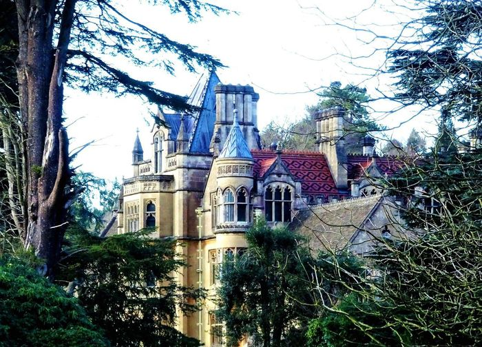 Fairy Castle Tyntesfield History Tree Architecture Built Structure Growth No People Building Exterior Low Angle View Day Outdoors Nature