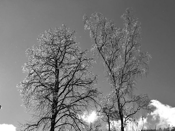 Funkelnde Tröpfchen Bare Tree Branch Low Angle View Outdoors No People Tranquil Scene Scenics