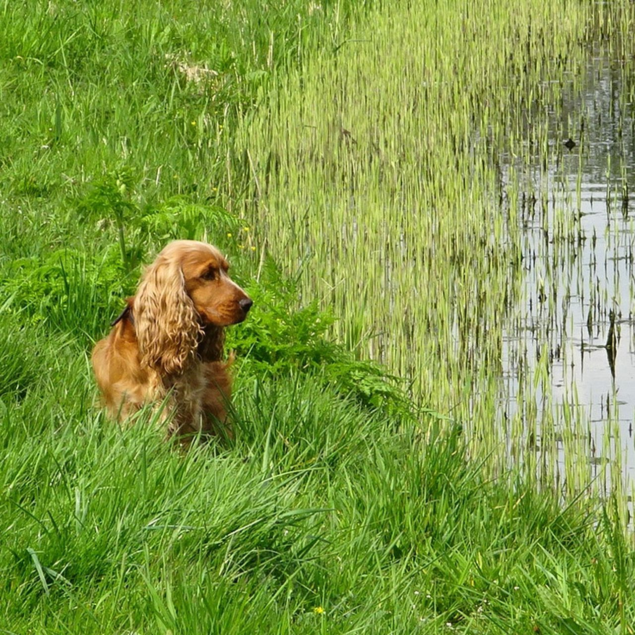 one animal, domestic, plant, dog, pets, domestic animals, canine, grass, animal, mammal, vertebrate, animal themes, green color, nature, day, field, growth, land, no people, outdoors