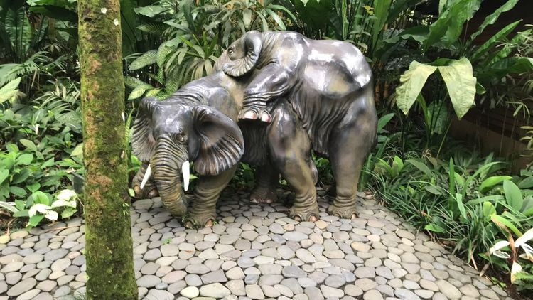 Animal Themes Animals In The Wild Day Elephant Mammal Nature Outdoors Plant