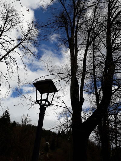 Camprodon Trobadainstagramers Girona Catalunya Catalonia Ripolles Passeig Maristany Faroles Ligth And Shadow Tree Flying Silhouette Branch Sky
