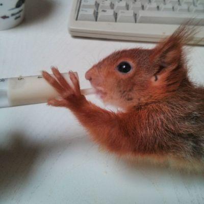 Fütterung | Nexus4 Eichhörnchen Erny Rheydt Wohnglück