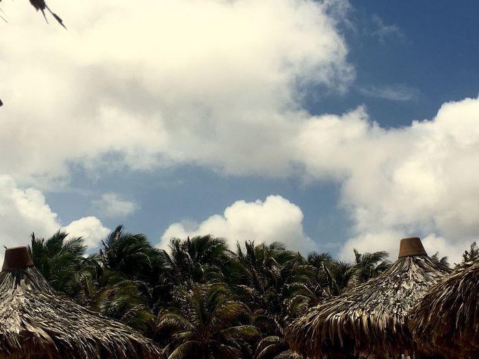 Sky Palm Tree