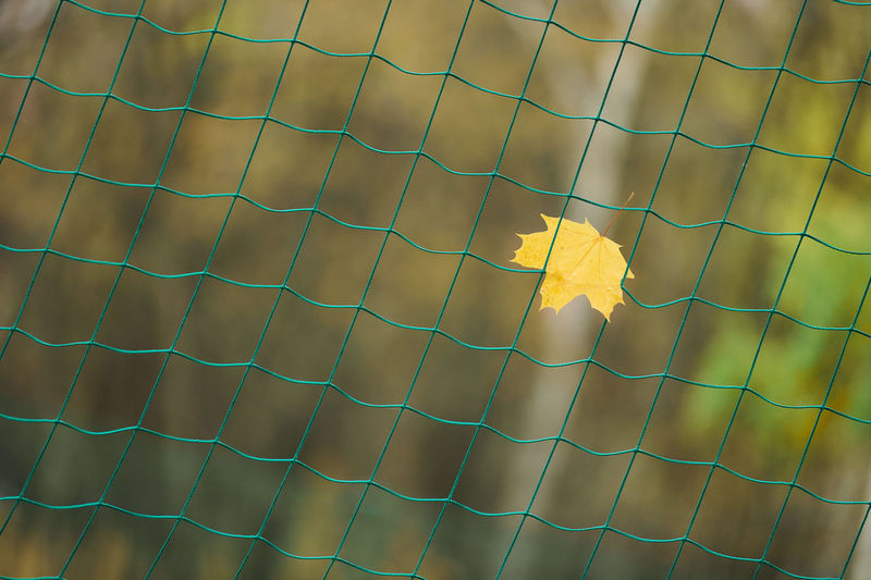Close-up of yellow flower on fence