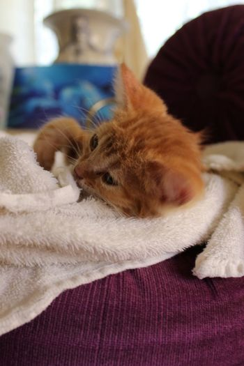 Hello World Kitten New Owner Found In Trash Can Cat Cat Lovers Ginger Ginger Cat Cute Pets Showing Imperfection Hope Small Pets Mammal Sleepy