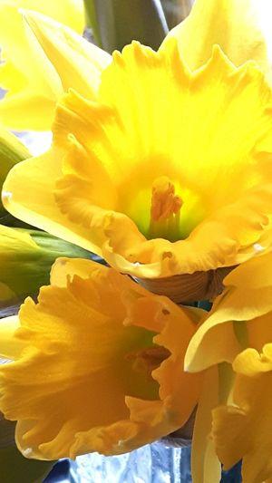 Urban Spring Fever Flowers Startofspring Welshflower Myfavouritecolour Hanging Out Hello World Appreciate The Scenery Amateurphotography Mountainash Taking Photos