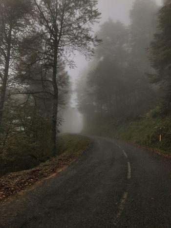 hard as beautiful. Training Bike Tree Road Plant Transportation Fog Nature Beauty In Nature