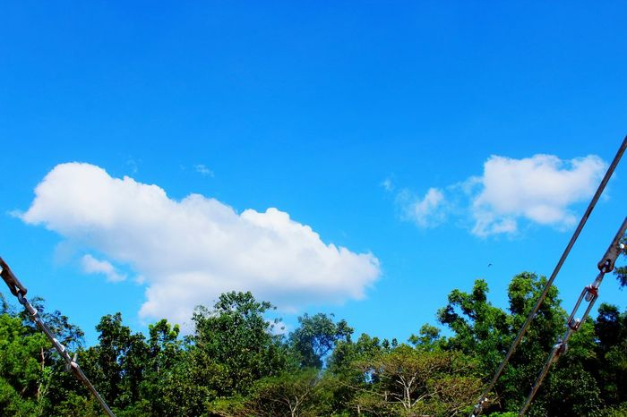 Tree Blue Low Angle View Cloud - Sky Nature Sky Day Outdoors No People Beauty In Nature