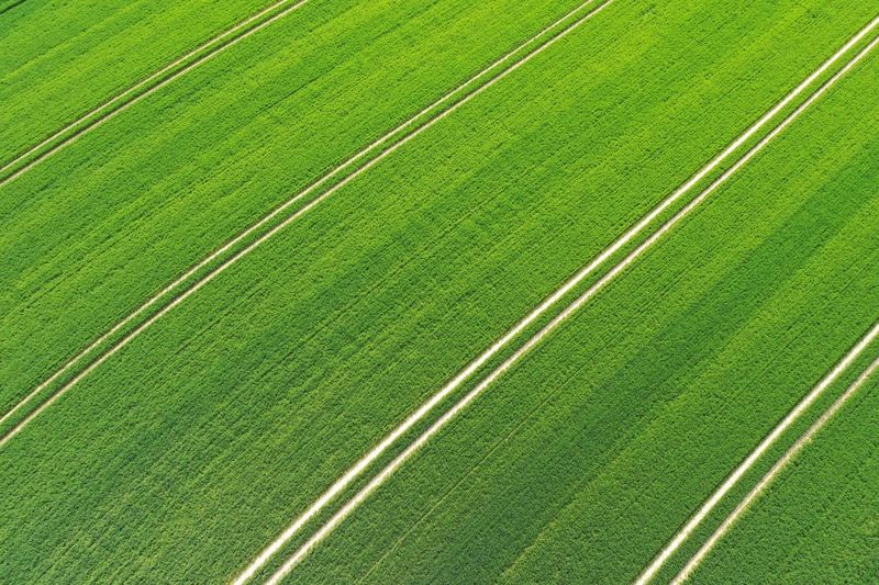Green Color Full Frame No People Plant High Angle View Backgrounds Grass Directly Above Pattern Agriculture Day Playing Field Sport Striped Nature Land Field Growth Turf Outdoors