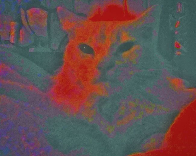Zen Kitty Teddy Feline Friend Teddy Mouse Yodacat Playingwithcolours I Love My Cat ❤