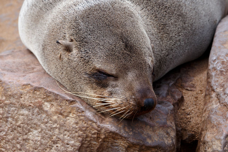 Close-up of an animal sleeping on rock