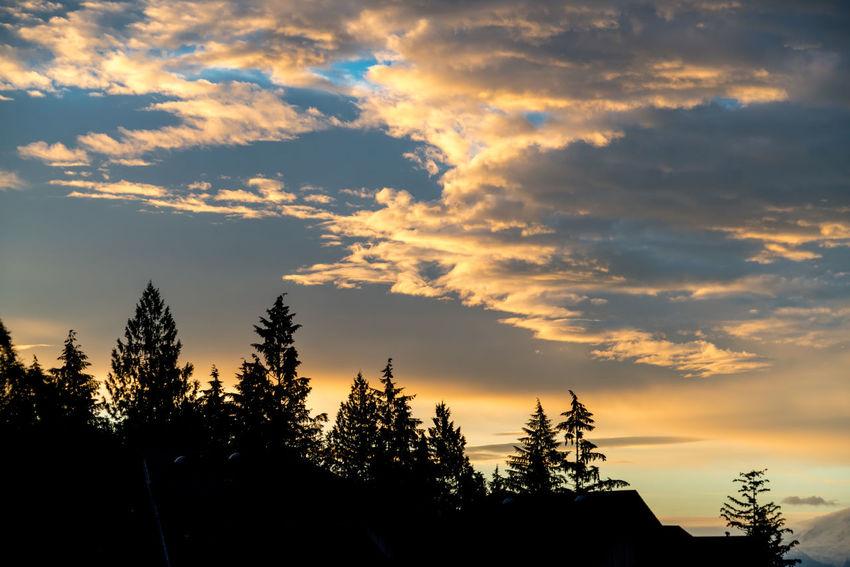 #beautifulSky #sunset #sun #clouds #skylovers #sky #nature #beautifulinnature #naturalbeauty #photography #landscape #supernaturalBC Beauty In Nature Cloud - Sky Nature No People Outdoors Scenics Silhouette Sky Sunset Tranquility Tree
