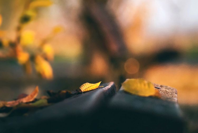 The beauty of nature Fall Awesome Earth Finesteye Close-up Selective Focus Plant Part Leaf Nature Autumn Beauty In Nature Yellow
