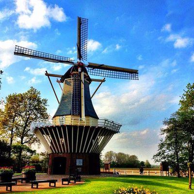 Dutch #windmill #keukenhof #holland #ubiquography #igersholland #jj_forum #flower #tulipfieldsexperience Flower Holland Windmill Keukenhof Jj_forum Ubiquography Igersholland Theflowerofgardens Tulipfieldsexperience O2travel