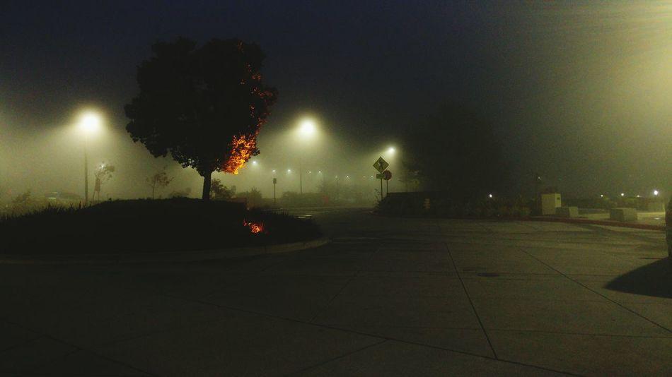 Dense Fog at Skyline College in San Bruno, California First Eyeem Photo