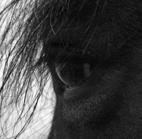 Horsegirl Horse Eye Eyelash Pets Mammal