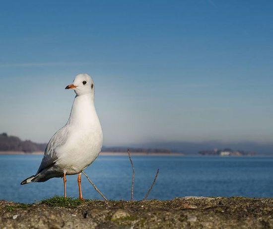 Chiemsee Birds Lake Gemany  Europe Polfilter Nikon D3100 Helloworld