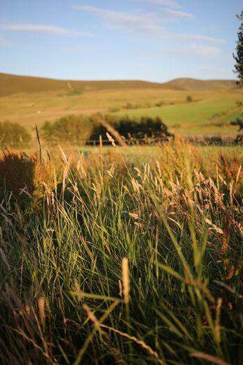 Scotland Grass EyeEm Selects Plant Sky Land Field Landscape Growth