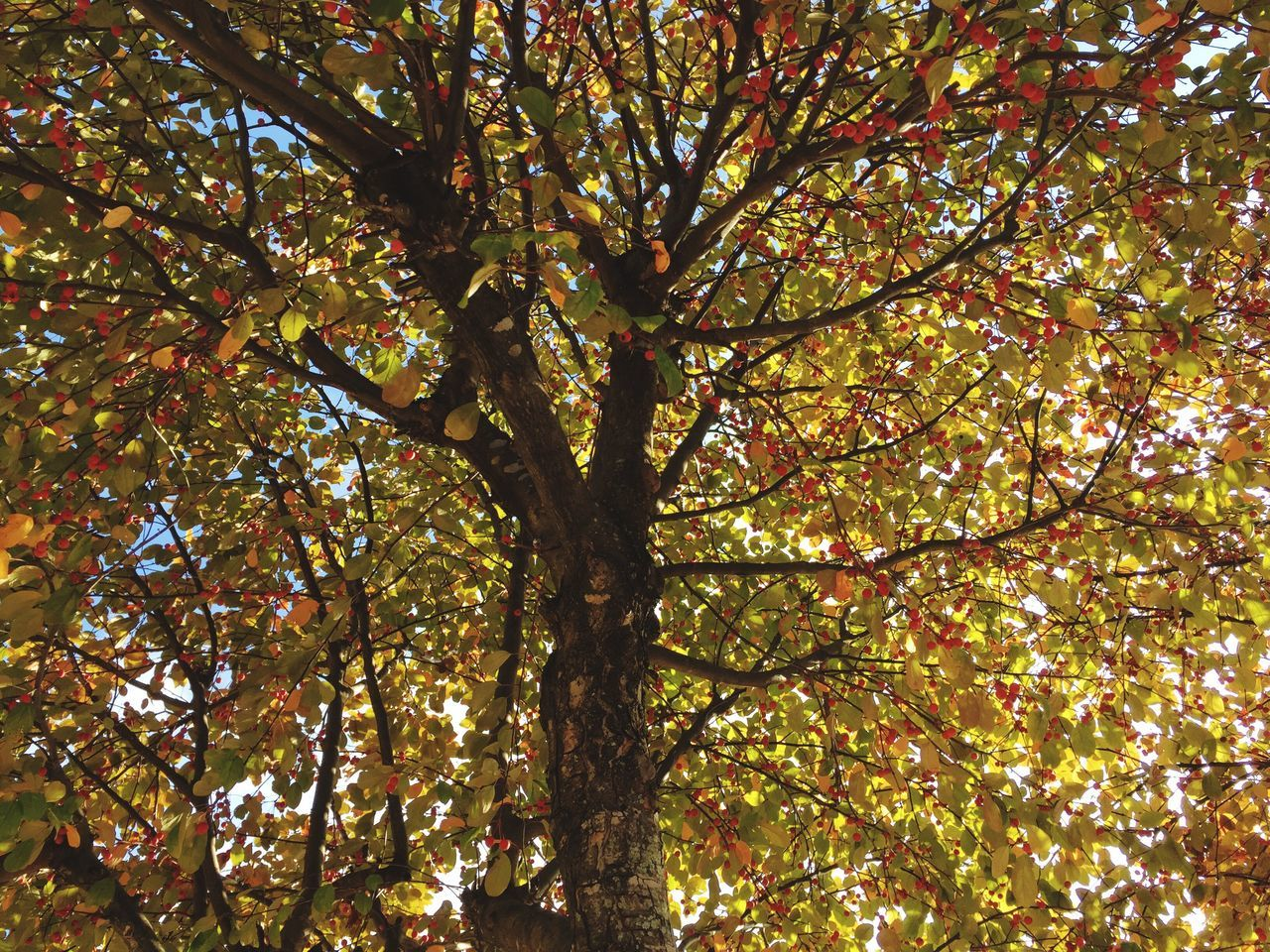 View Of Tree With Autumn Leaves