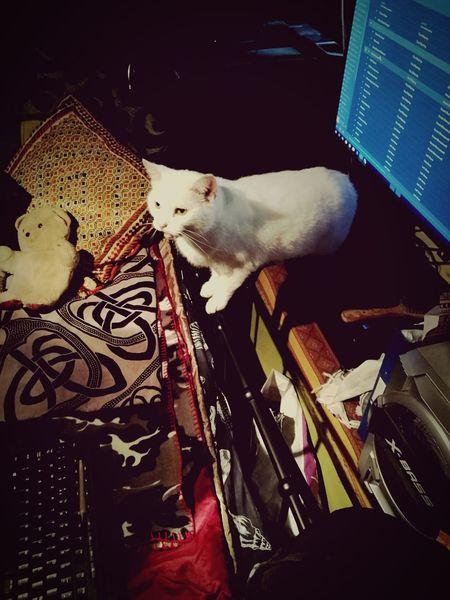Domestic Animals One Animal Pets Cat Domestic Cat Feline United Kingdom EyeEm Ireland 🍀 EyeEmBestPics Cat Lovers Cat♡ Cat Photography