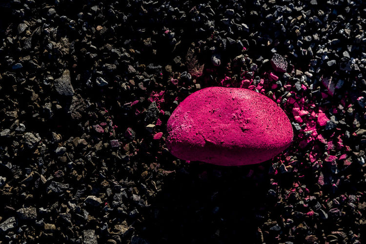 High angle view of pink rose on rock