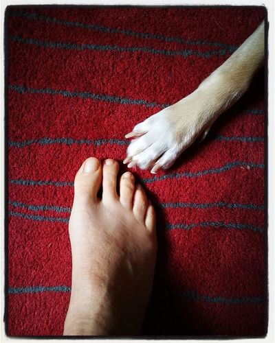 NOI Dog You And Me Us My Dog I And My Dog Human Foot barefoot Human Body Part Red Rug Low Section Close-up