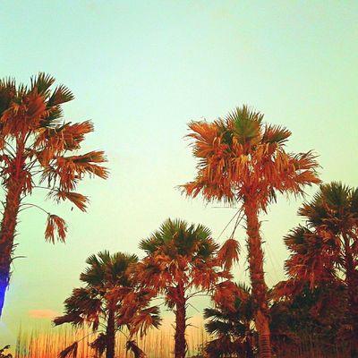 Morning El kabron Travel Today Sky Trees Palmtree Beach Balibeach Cliff Sunrise Sky_specialist Skymadness Instalike Indonesianrepost Instacolor Instahub Photooftheday Picoftheday Instapic Instadaily Instatoday Instapop Igers Instanesia Instafollow Instafamous igdaily instanusantara bali indonesia LangitbaliPhotoworks