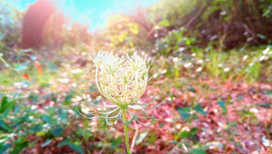 Plants Flower