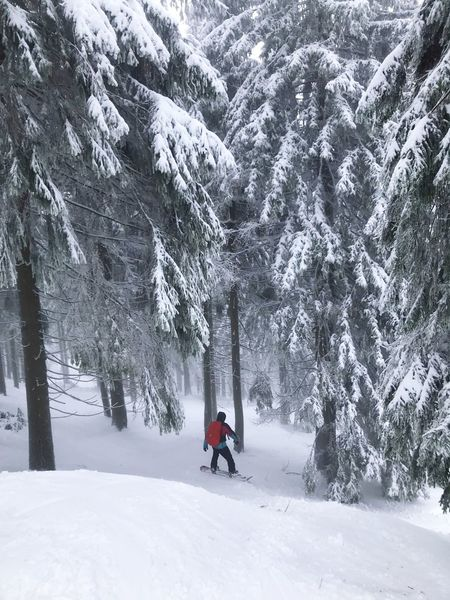 Snowboarding Skiing Snowboarding Snow Tree Winter Cold Temperature Plant Land Forest Mountain Beauty In Nature Leisure Activity Nature Sport Coniferous Tree Winter Sport Pine Woodland Scenics - Nature Environment WoodLand