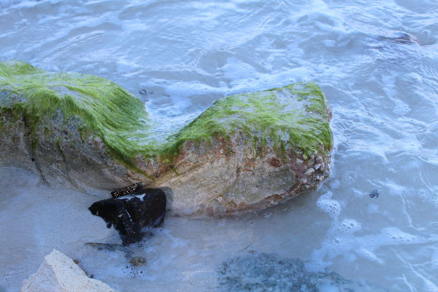 Sea side rock covered in seaweed. Beauty In Nature Ocean Rippled Rock Sand & Sea Sea Tranquility Water Water Surface