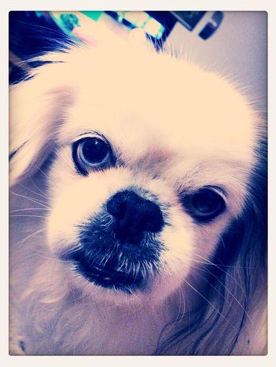 Dog I Love My Dog 👑King💎Kurt👑