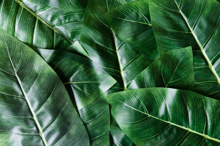 Abstract Abstract Backgrounds Backgrounds Banana Leaf Beauty In Nature Close-up Day Full Frame Green Color Growth Leaf Leaf Vein Leaves Natural Pattern Nature No People Outdoors Palm Leaf Palm Tree Pattern Plant Plant Part Textured