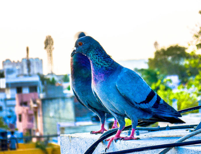 Red Eyes Eye View Eye For Photography Birds🐦⛅ Birds Of EyeEm  Bird Photography Looking At Camera Dove In The City Dove Of Peace EyeEm Filter EyeEmBestPics EyeEm The Best Shots EyeEm Best Shots My Favourite Photo EyeEm Birdstagram Enjoying The View Dove Love Dove In The Terrace Dove Freeze Better Look Twice