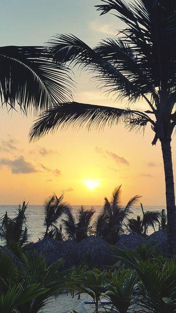 Tree Water Palm Tree Sea Beach Silhouette Reflection Sky Horizon Over Water Coconut Palm Tree Romantic Sky