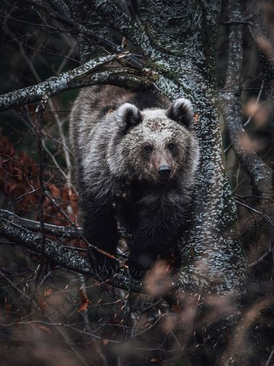View of bear in forest during winter