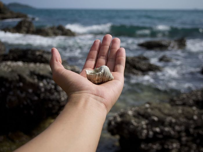 Cropped image of hand holding shell at beach