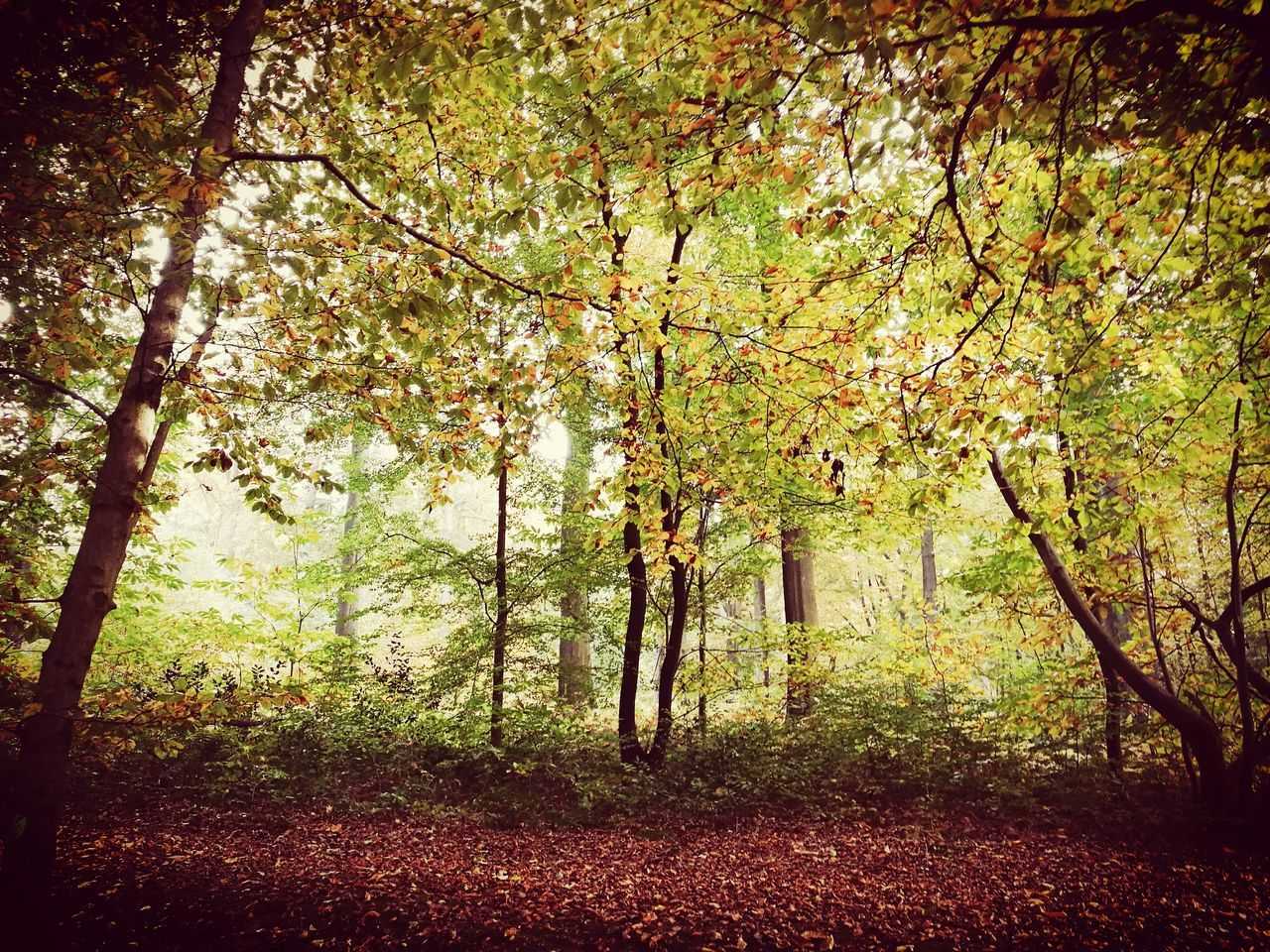tree, nature, branch, autumn, beauty in nature, tranquility, growth, tranquil scene, no people, change, forest, scenics, tree trunk, day, outdoors, leaf