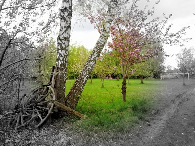 Landscape Wendland with a little color... Tree Growth Nature Grass Beauty In Nature Outdoors Day Sky No People Originalpicture GetbetterwithAlex Tree Area Beauty In Nature Forest Tree Black Color Power In Nature Rural Scene