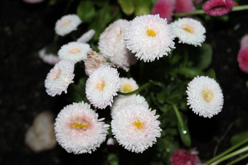 Beauty Beautiful Nature Beauty In Nature Botany Close-up Day Flower Flower Head Flowering Plant Flowers Focus On Foreground Fragility Freshness Growth Inflorescence Nature Nature_collection No People Outdoors Petal Plant Selective Focus Softness Vulnerability  White Color