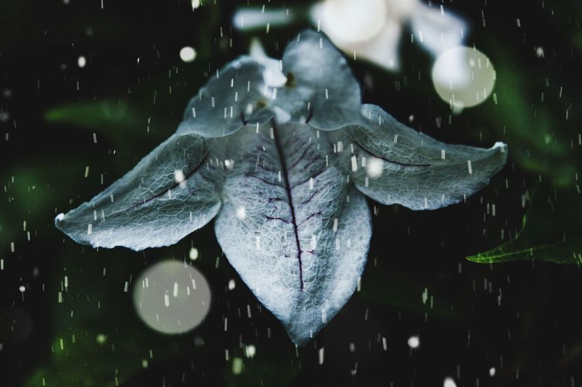 Flowers Lilly Rosé Flower Head Flowers Flower Collection Snow Snow ❄ Cold Wet Water No People Nature Beauty In Nature Leaf Day Outdoors Close-up Fragility Animal Themes