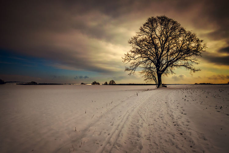 Bare tree on snow field against sky during sunset