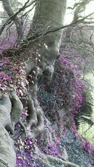 Make Magic Happen Tree And Sky Tree Hugging Taking Photos Nature Celbridge