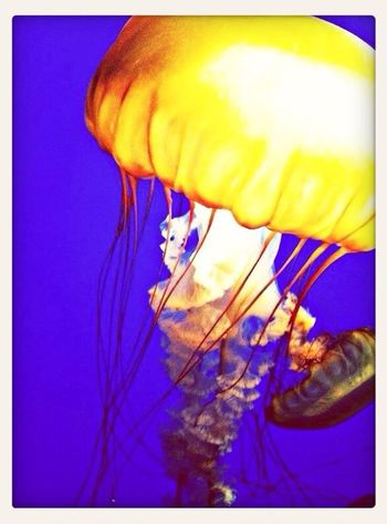 Jellyfish ima sting you Enjoying Life Taking Photos Beautiful Summer