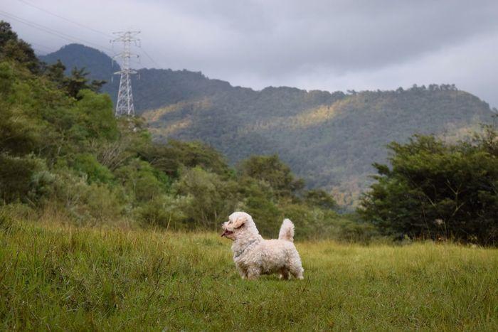 Juguete V Dog Nature Pets Landscape Maltese Dog D3300 Nikond3300 Mexico