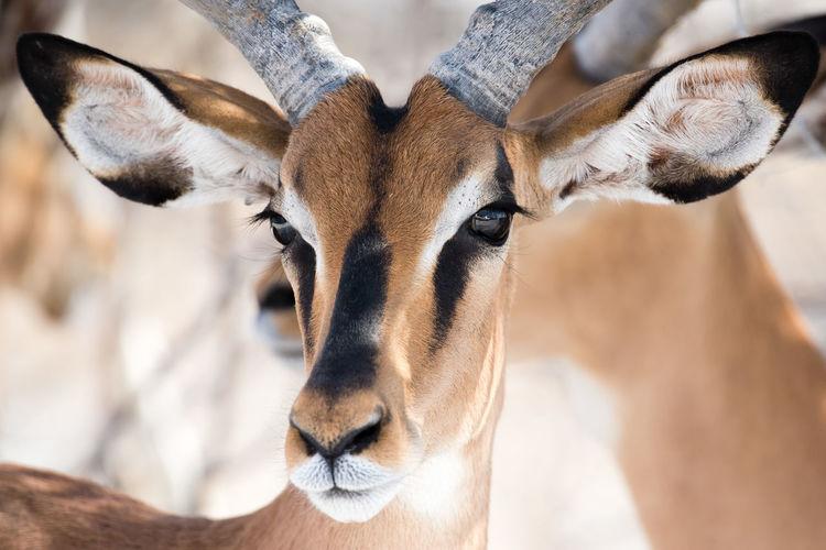 Close-up portrait of animal
