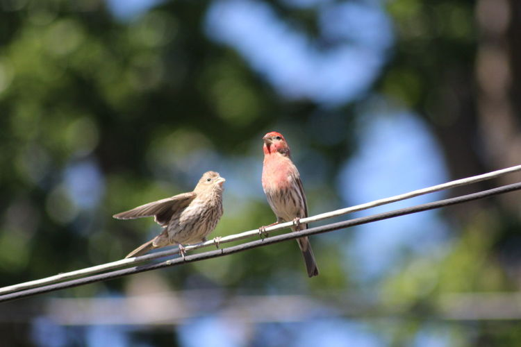 Close-up of birds perching on cable