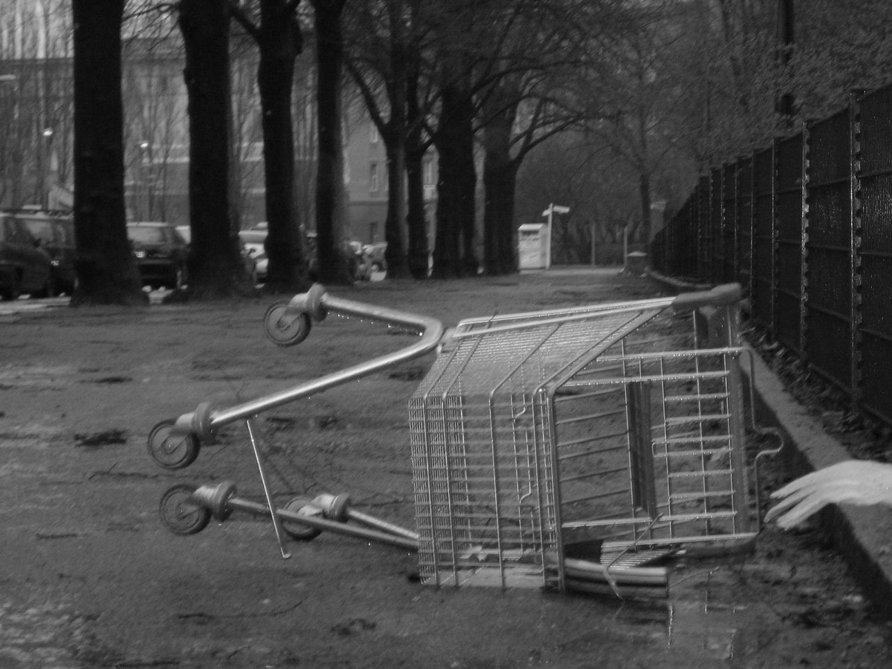 tree, tree trunk, shopping cart, trolley, no people, day, outdoors, bare tree, architecture, supermarket