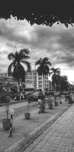 Tree Outdoors No People Palm Tree Day Architecture Sky Nature City Scenics Cityscape Outdoor Dramatic Sky Cloud - Sky Blackandwhite Travel Destinations Beauty In Nature Building Exterior Black And White Mobilephotography Sky And Clouds Urbanexploration The Street Photographer - 2017 EyeEm Awards