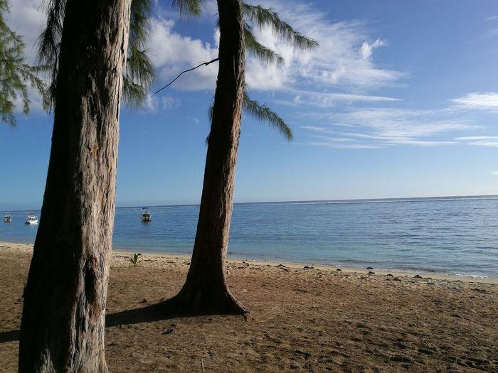 Beach Beach Day Sea Seascape Seaside Filao Tree Sunny Day Sunny☀ Sunshine
